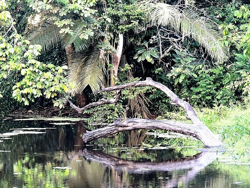 Au coeur de la forêt amazonienne