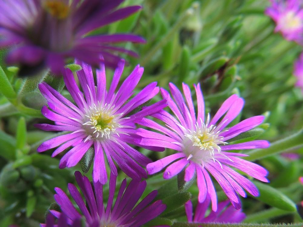Les plantes de mon jardin