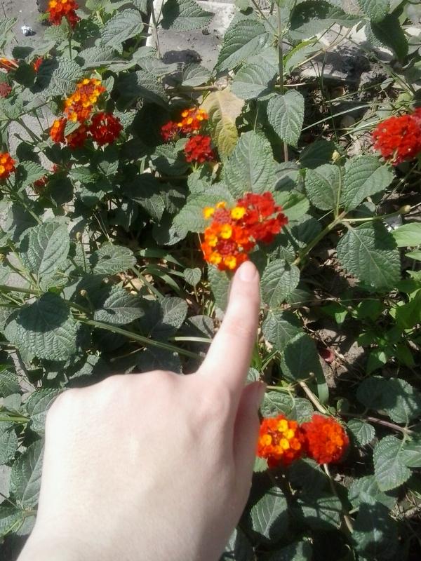 تو هميشه برای من مثل گلی