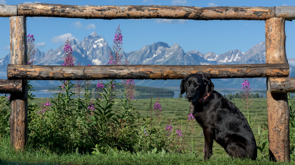 Gussie and the Tetons