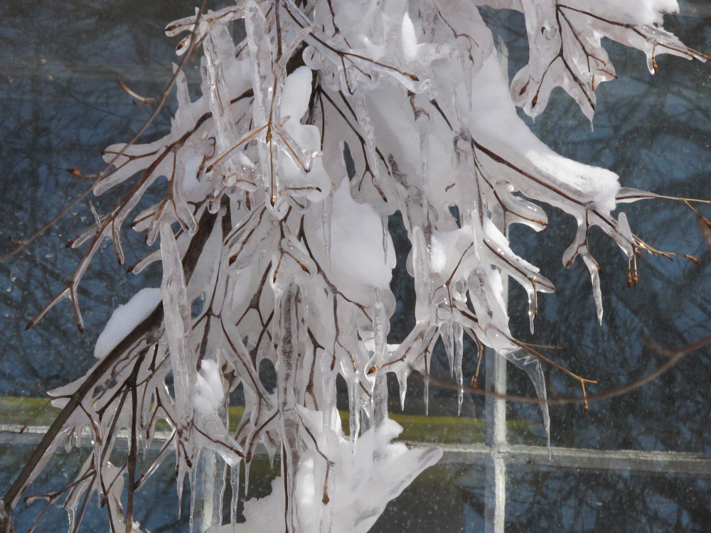 icicles and snow on tree branches