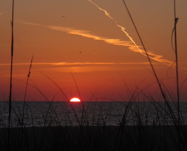 sun sets behind grass on Anna Maria Island
