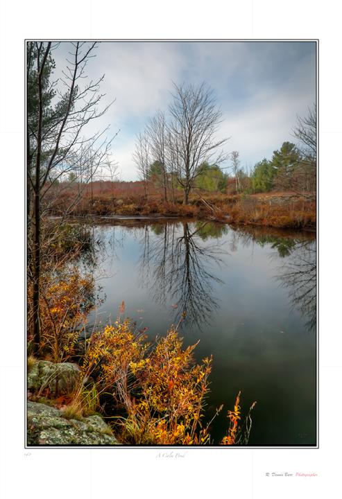 A Calm Pond