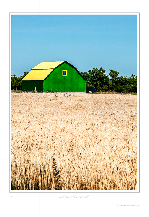 Little Barn In the Wheat Field