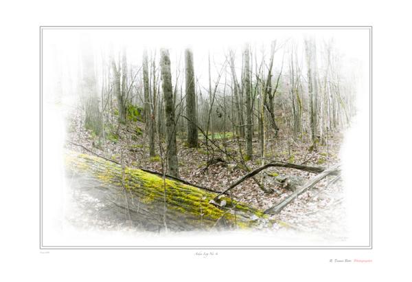 Arden Log No. 4