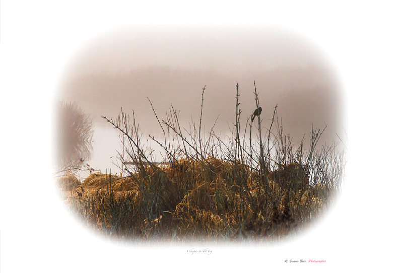 Whispers In The Fog