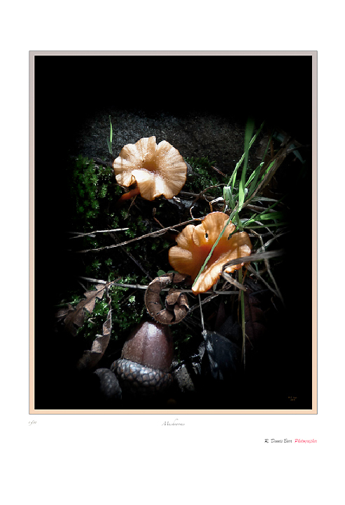 Mushrooms and Acorns