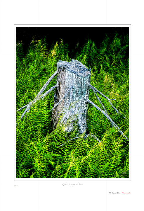 Ghost Amongst the Ferns