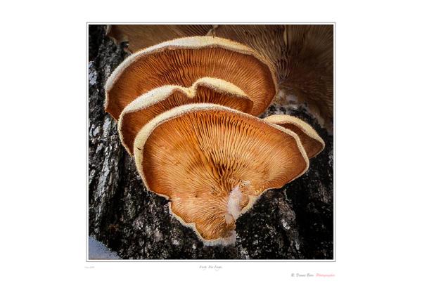 Frosty Tree Fungi