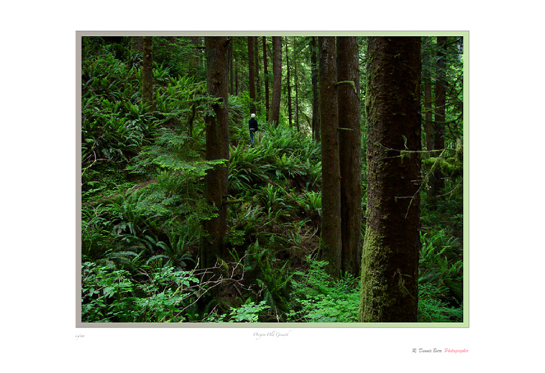 Oregon Old Growth