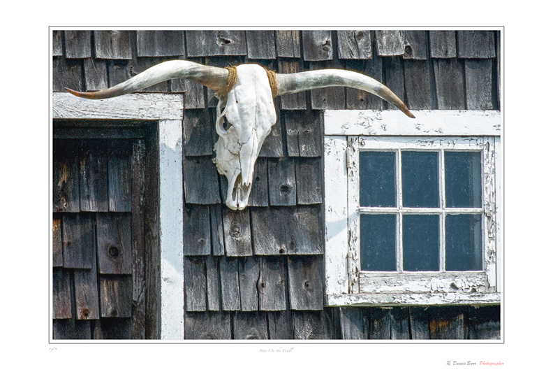 Steer On The Wall