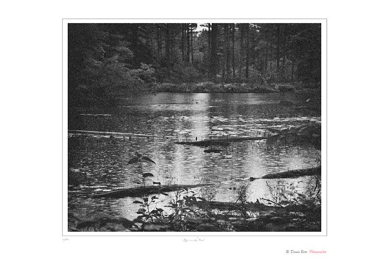 Rain On The Pond