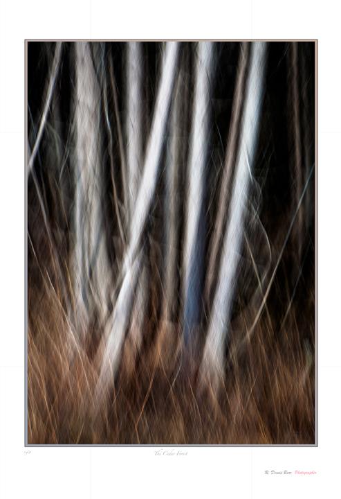 The Cedar Forest