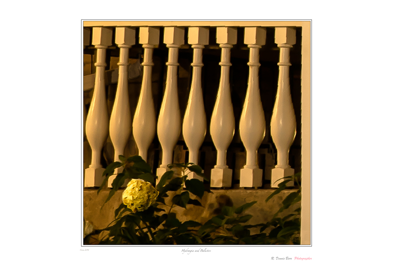 Hydrangea and Balusters