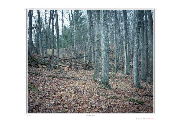 The Grey Forest