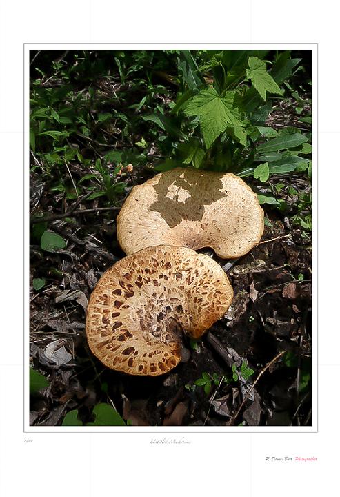 Untitled Mushrooms