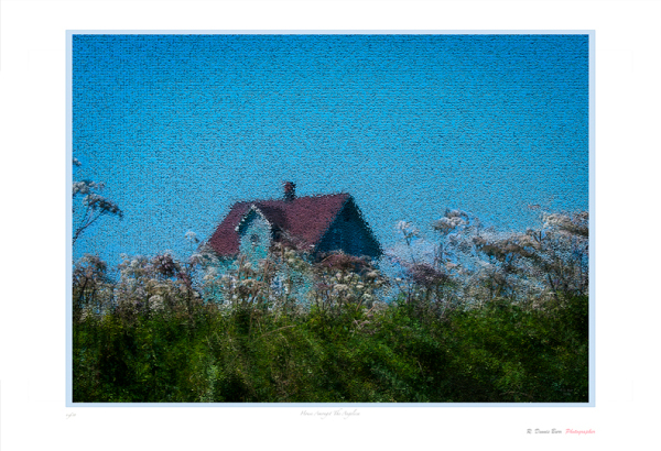 House Amongst The Angelica