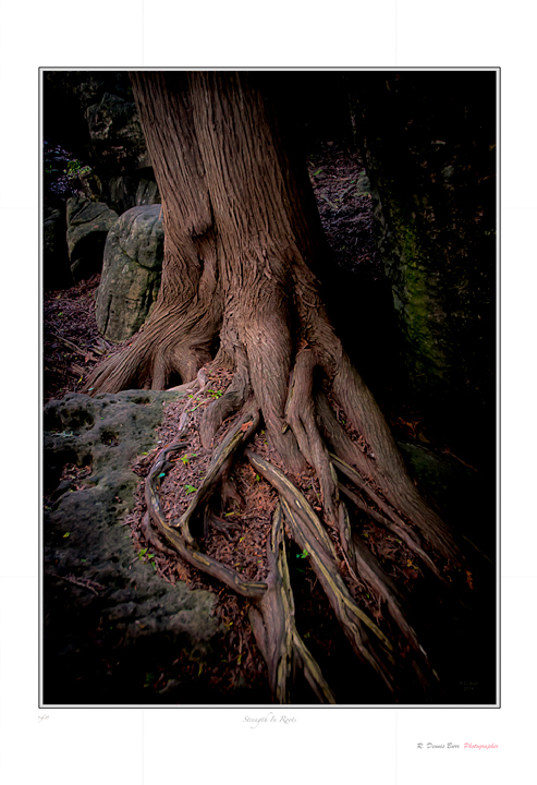 Strength In Roots