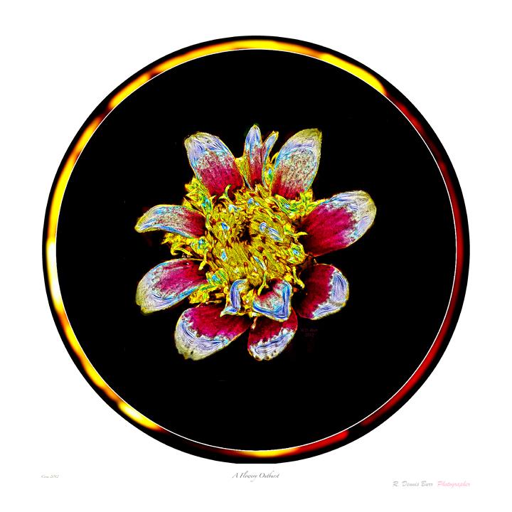 A Flowery Outburst