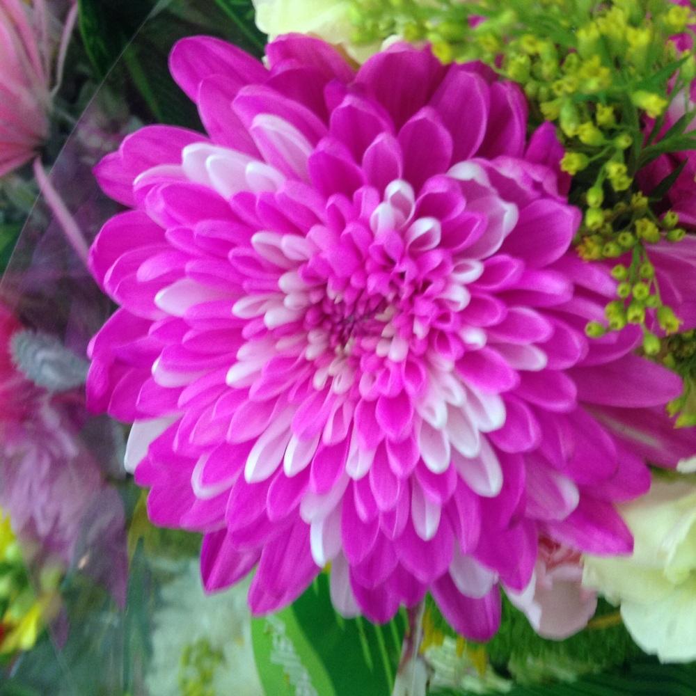 Pink flower for Easter