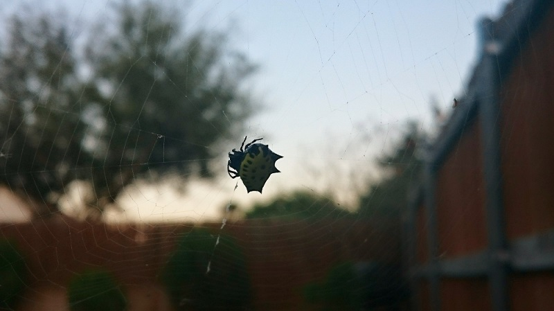 Cool looking spider