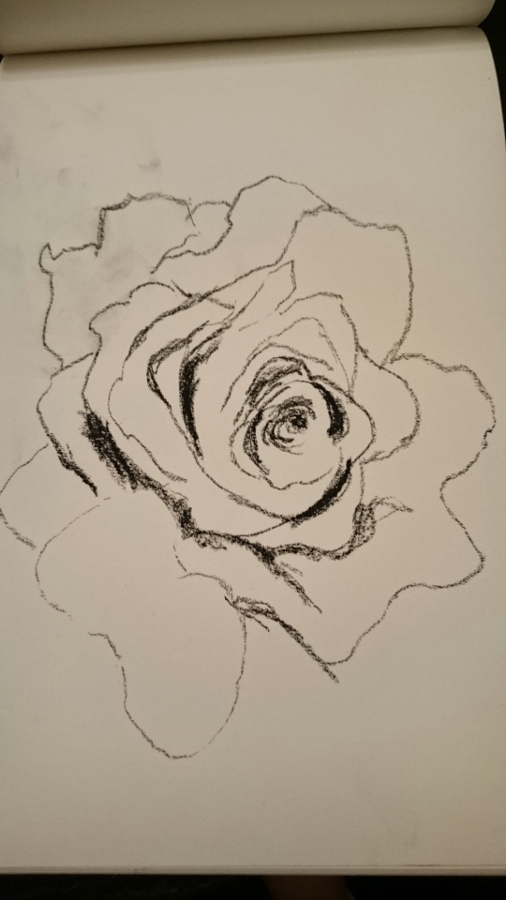 Sketch of a rose I photographed