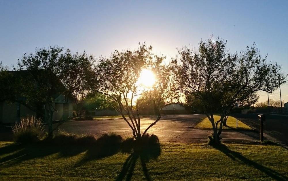 sunset, sun, trees, street, afternoon, texas