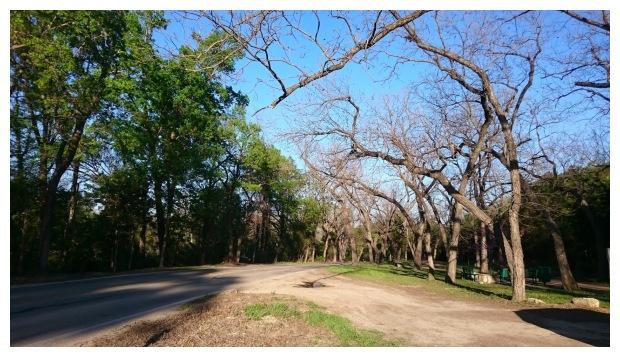 Half green trees half bare trees