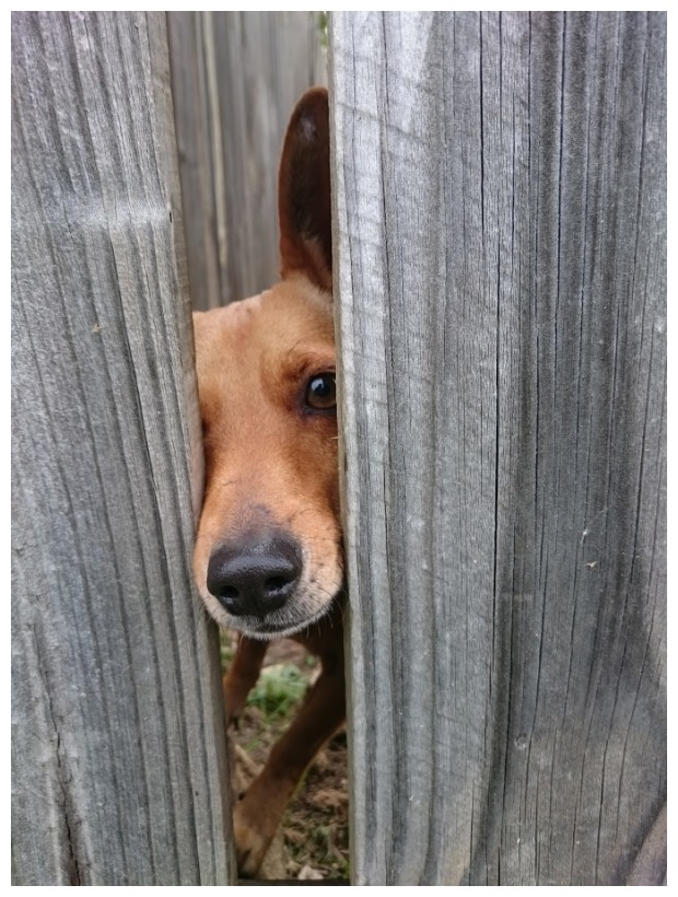 A nosy neighborhood dog