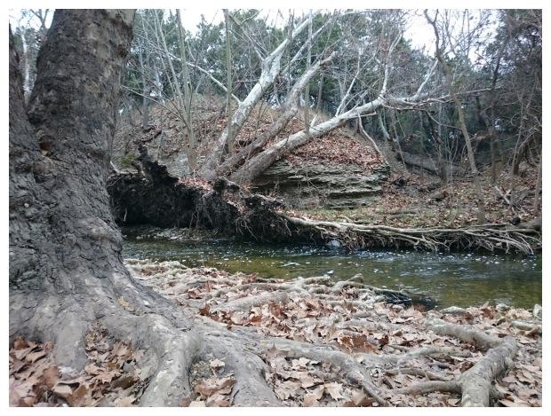 fallen tree, roots, water, creek, texas