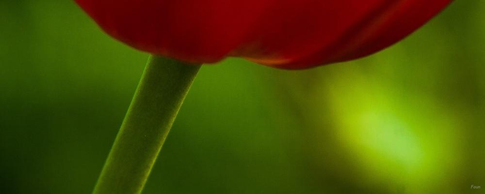 Hypnose en vert et rouge