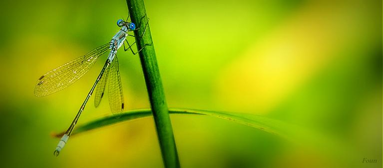 Une petite bleue :)
