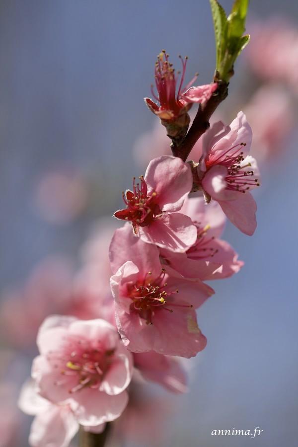 Signe du printemps