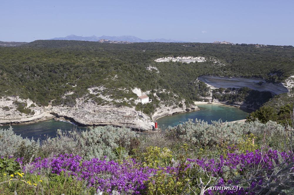 Le printemps Corse sur Bonifacio