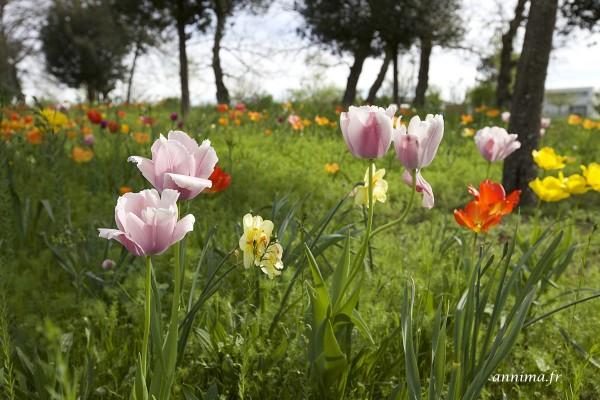 Jachère fleurie à Toulouse