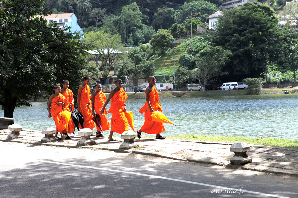 Monks, Sri Lanka