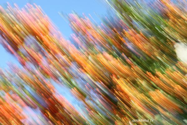 color, motion