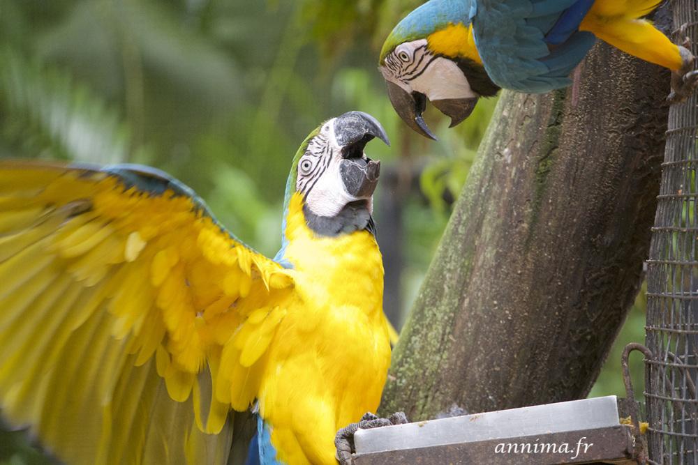 birds, parrots