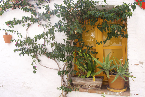 window, flowers, yellow