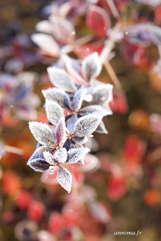frozen, red