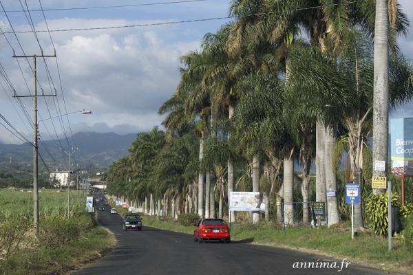 Costa Rica, palm trees, volcano