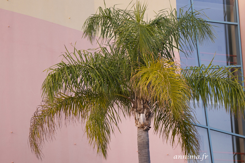Palm tree, colors