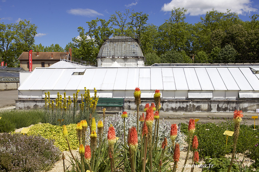 greenhouse, plants, flowers