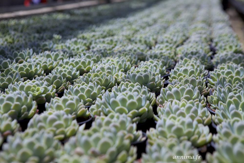 greenhouse, plants, flowers, succulent