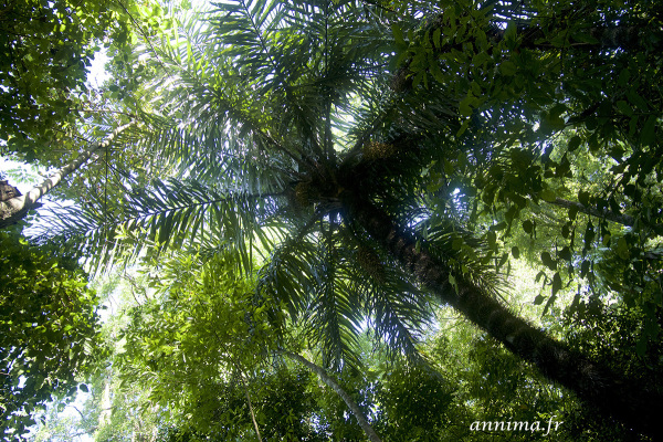 Costa Rica, forest