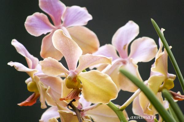 orchids, costa rica