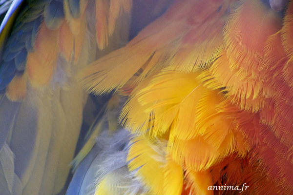 bird, ara, colors, feathers