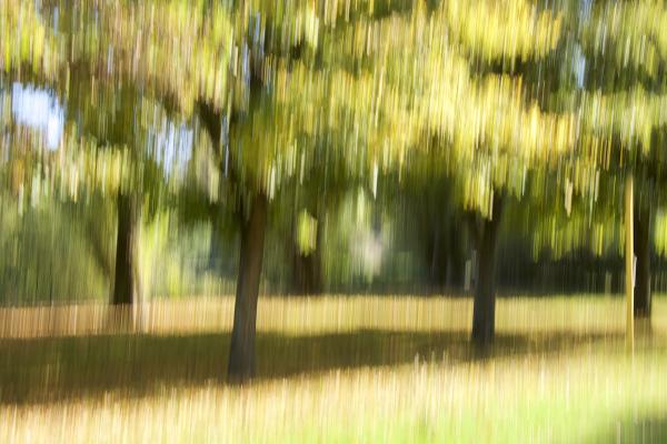 fall, automn