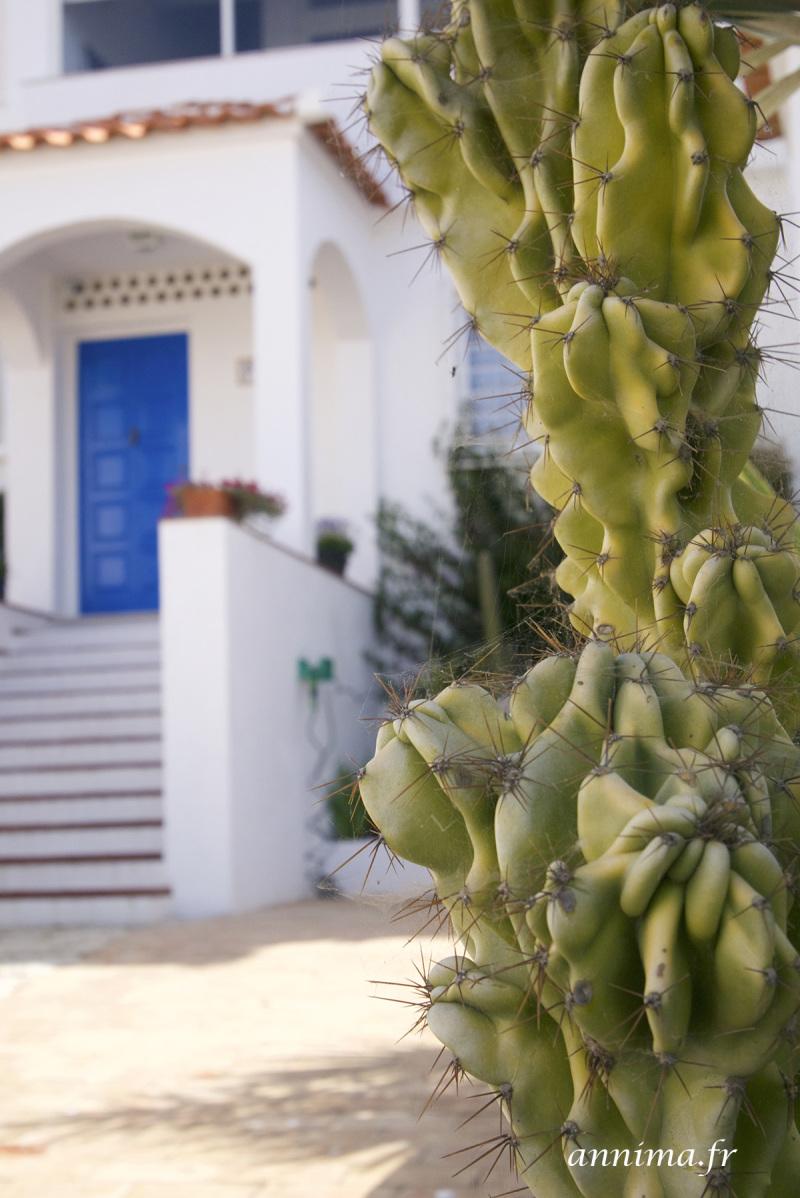 Albufeira cactus