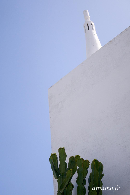 Albufeira cactus lines